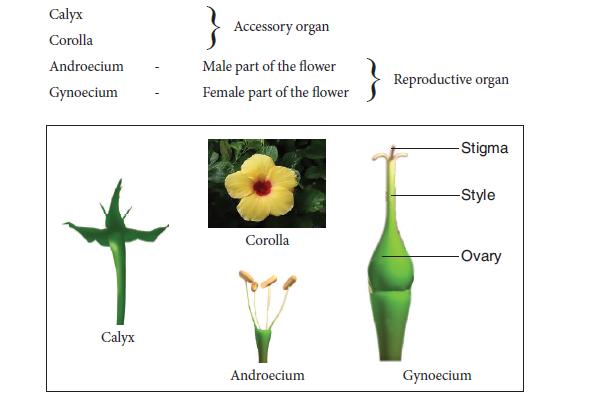 Practical 9 Flower parts