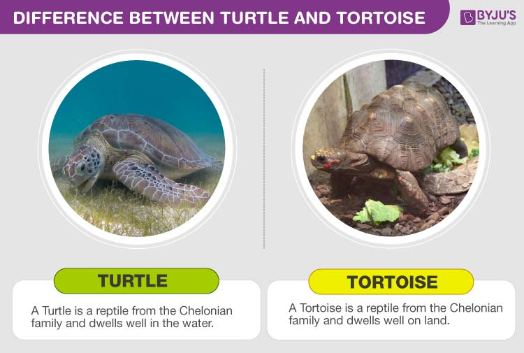 Difference between Turtles and Tortoises