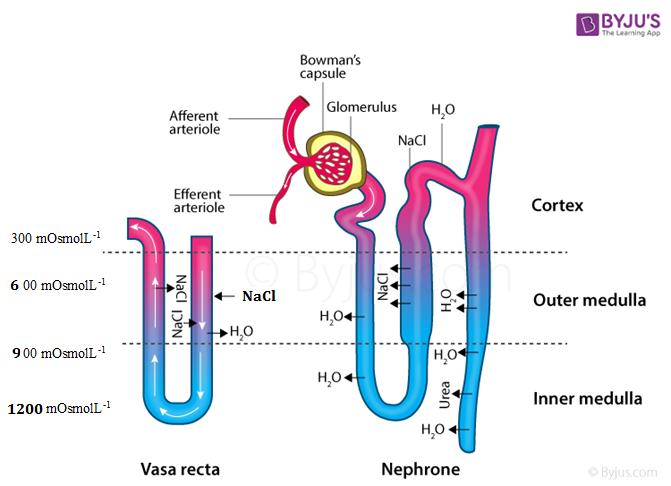 Biology - chapter 19 - image 1