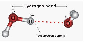 What is hydrogen bonding in water
