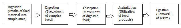 Steps in nutrition