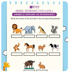 Animals Worksheets for Grade 1