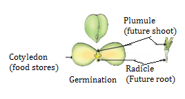 CBSE notes Class 10 Chapter 8 image - 10