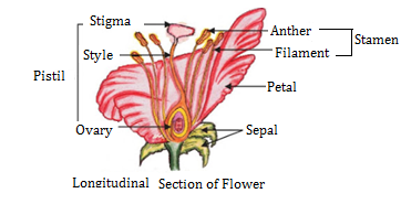 CBSE notes Class 10 Chapter 8 image - 8