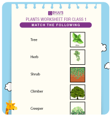 Types of Plants for Grade 1 Worksheets