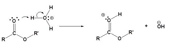 Transesterification Mechanism (Acid) Step 1
