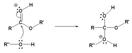 Transesterification Mechanism (Acid) Step 2