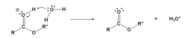Transesterification Mechanism (Acid) Step 5
