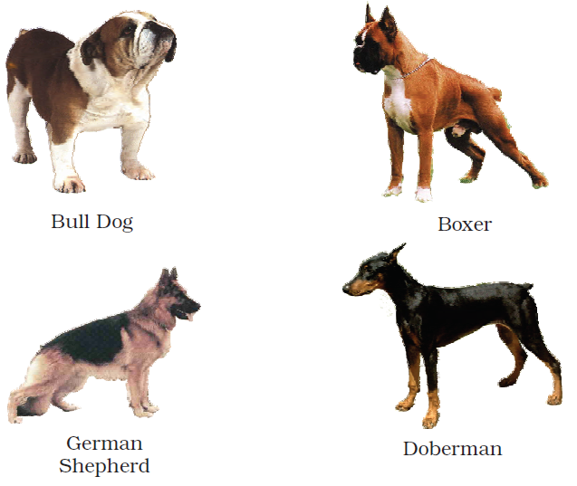 NCERT Solutions Class 3 English Unit 7 Poem - Puppy & I -1