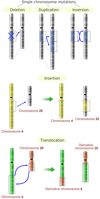 Structural abnormalities in the chromosome