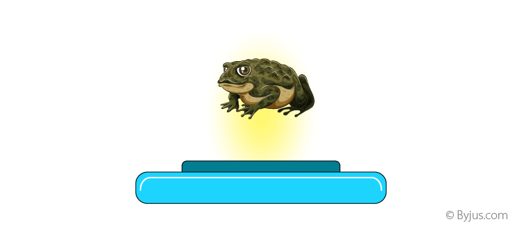 Frog in the Magnetic Field