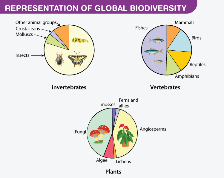 Representation of global biodiversity