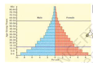 age-sex pyramid (population composition pyramid)