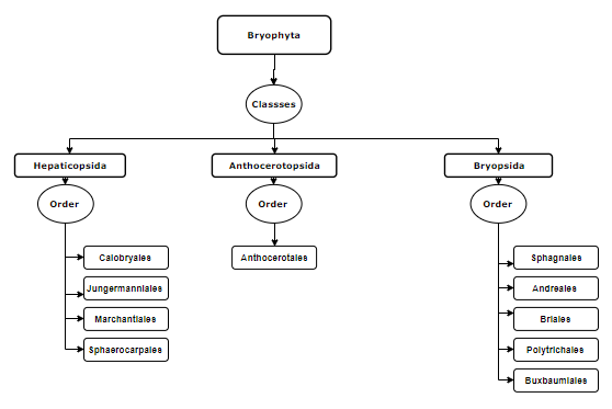Classification bryophyta
