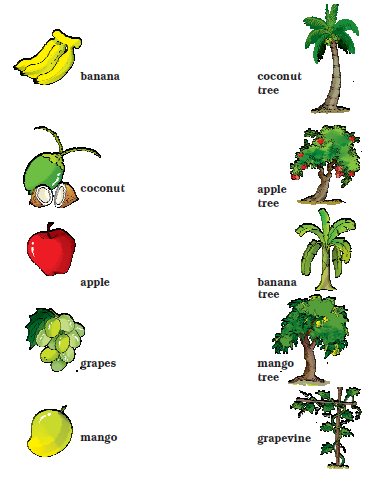 NCERT Solutions Class 1 English Unit 4 Story Mittu and the Yellow Mango - 5