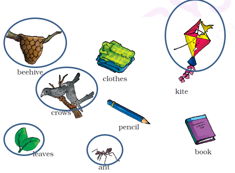 NCERT Solutions Class 1 English Unit 6 Our Tree - 2