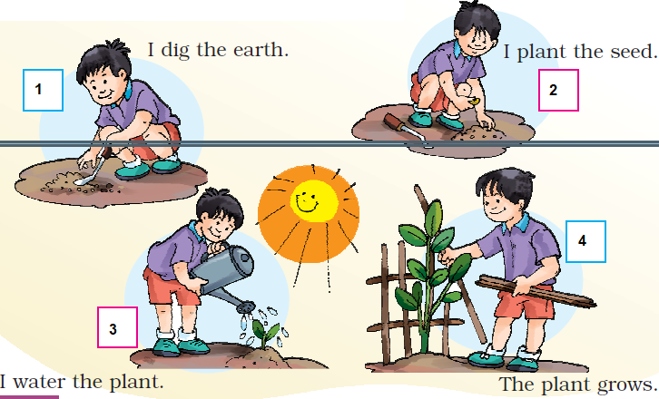 NCERT Solutions Class 1 English Unit 6 Our Tree - 4