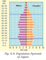 Population Pyramid of Japan