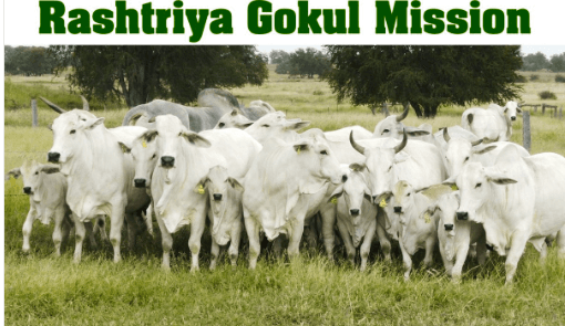 Rashtriya Gokul Mission- Image 1