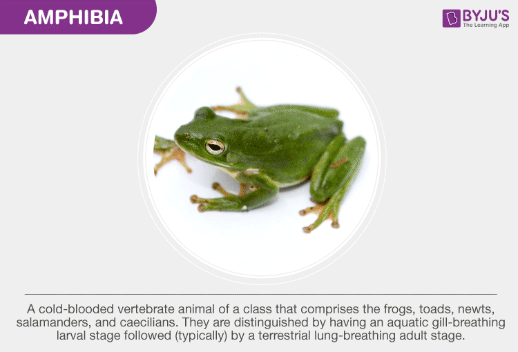 Structural Organization of  Amphibia -Frog