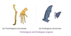 Homologous and Analogous organs