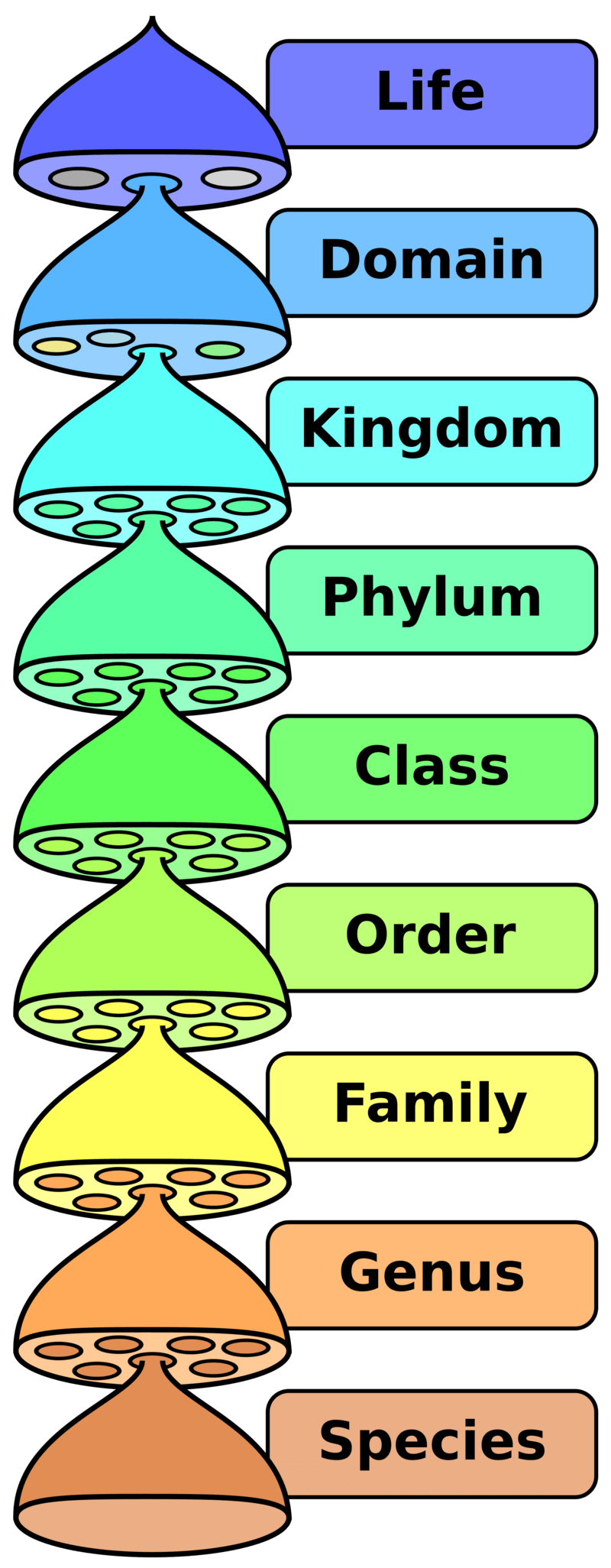Hierarchy_of_classification