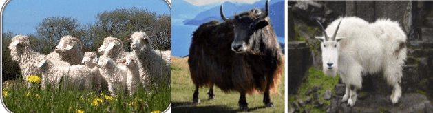 Wool from Animals