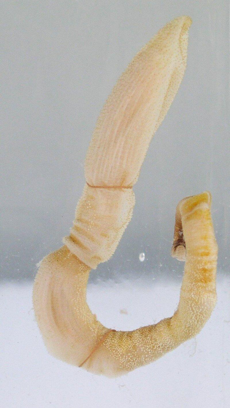 content_acorn_worm