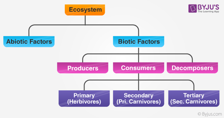 Structure of the Ecosystem