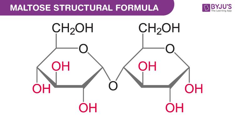 Maltose structure