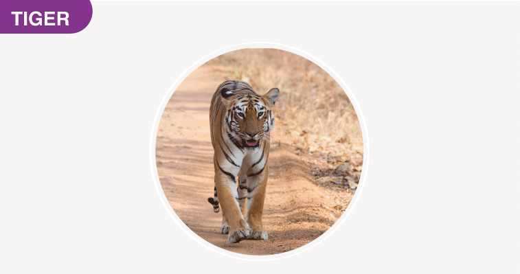 National Parks of India - Tiger Reserve