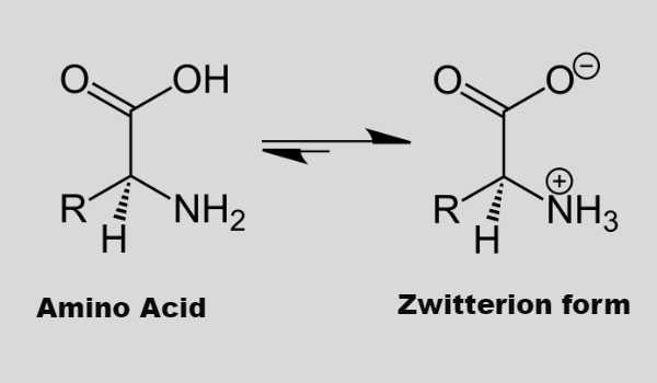 Zwitterionic form of amino acids