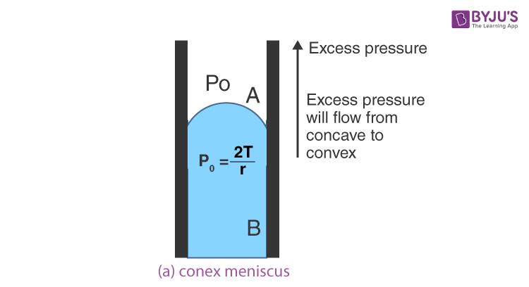 Conex Meniscus