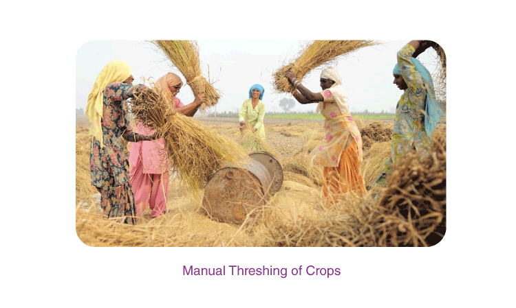 Crop Production and Management 5
