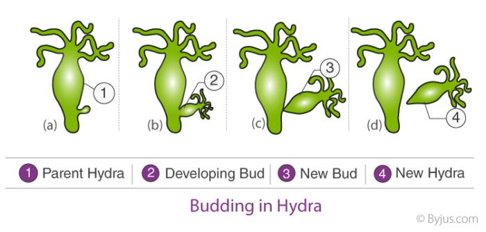 How-Do-Organisms-Reproduce-2