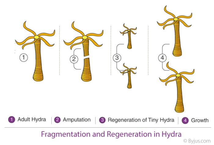 How-Do-Organisms-Reproduce-3