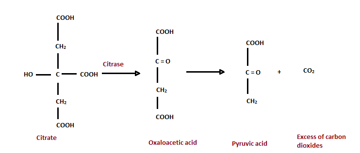 Citrate Test using Citrase Enzymes