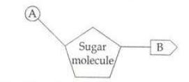 KBPE Class 10 Biology Question 7