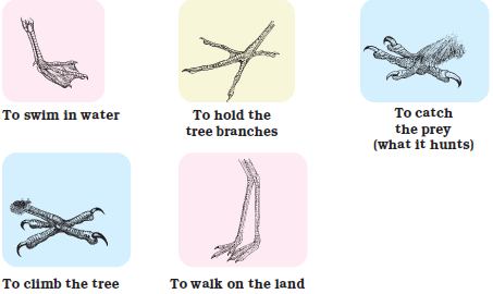 NCERT Solutions for Class 4 Chapter 16 Image 3