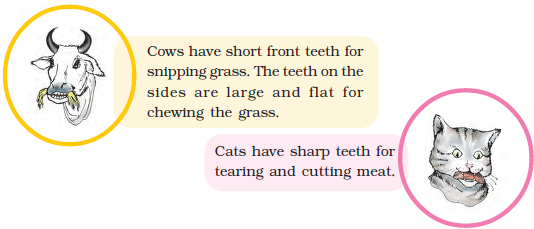NCERT Solutions for Class 4 Chapter 16 Image 5