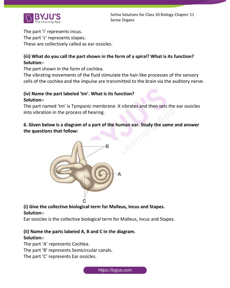 Selina Solutions For Class 10 Biology Chapter 11 Sense Organs 16