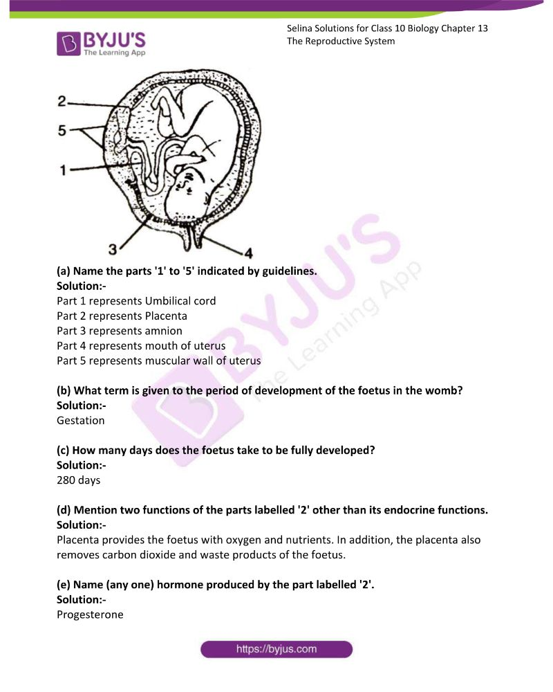 Selina Solutions For Class 10 Biology Chapter 13 The Reproductive System 19