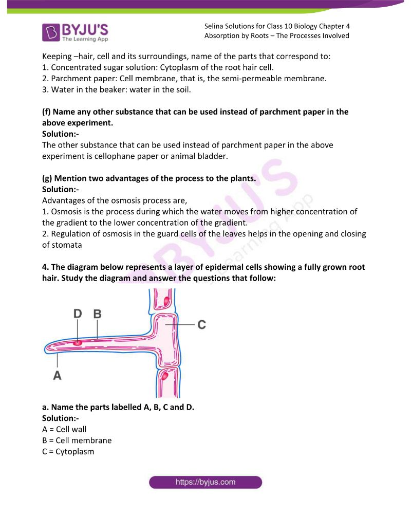 Selina Solutions For Class 10 Biology Chapter 4 Absorption By Roots The Processes Involved 14