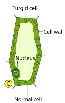 Selina Solutions for Class 10 Biology Chapter 4 Image 3