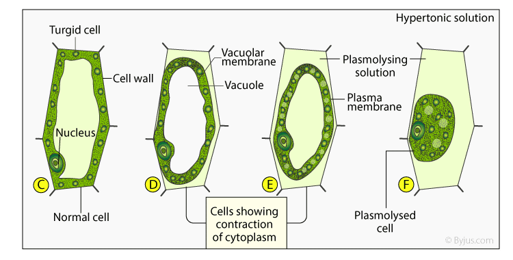 Selina Solutions for Class 10 Biology Chapter 4 Image 8