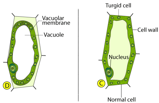 Selina Solutions for Class 10 Biology Chapter 4 Image 9