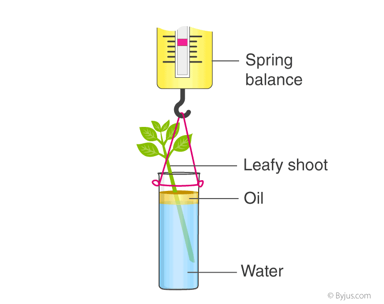 Selina Solutions for Class 10 Biology Chapter 5 Image 3
