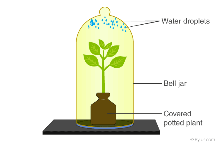 Selina Solutions for Class 10 Biology Chapter 5 Image 8