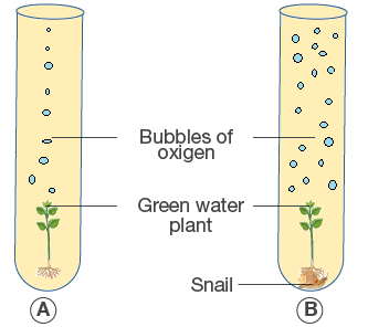 Selina Solutions for Class 10 Biology Chapter 6 Image 14
