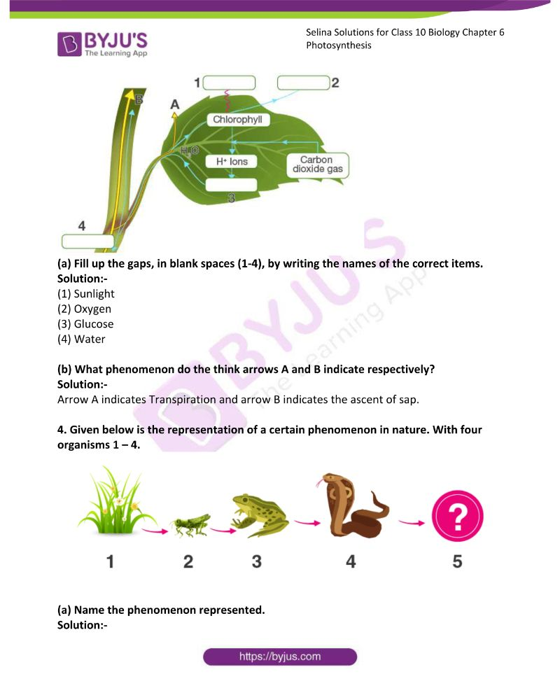 Selina Solutions For Class 10 Biology Chapter 6 Photosynthesis 14